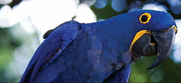 arara-azul-redmax-calcado-infantil